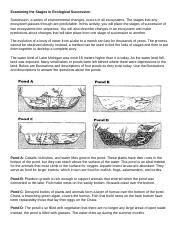 Examining the Stages in Ecological Succession (1).docx ...