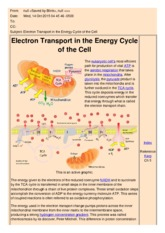 Electron Transport in the Energy Cycle of the Cell