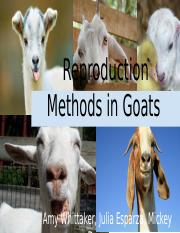 Goat Reproduction .pptx