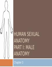 Chapter 3 PPT Human Sexual Anatomy Male Part 1_Student Version.pptx
