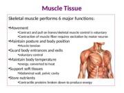 MuscleTissue (1)