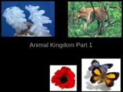 Lecture 21 Animals I Intro & Skeletal, Resp, Circ Sys