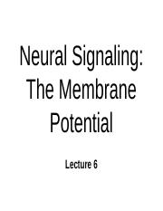 new membrane potential (1).ppt