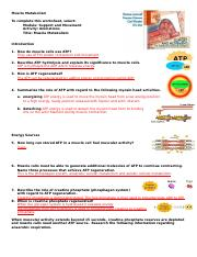 10 Muscle Metabolism AEd.docx