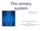 ANP 1107 The urinary system Pt. 3
