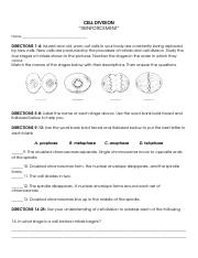 31 Section 1 Reinforcement Cell Division And Mitosis ...