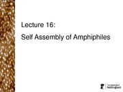 Self Assembly of Amphiphiles