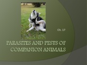 Ch._17_Parasites_and_pests_of_companion_animals.ppt