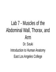 Lab 7.INM.MusclesoftheAbdominalWallThorax&Arm