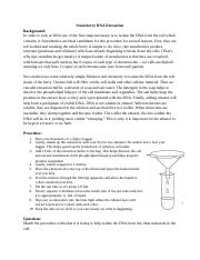 32 Strawberry Dna Extraction Lab Worksheet Answers ...