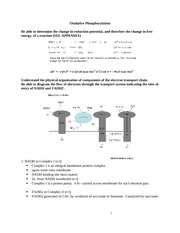 Study Guide - Oxidative Phosphorylation