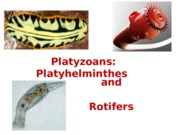 Lecture 19 - Platyhelminthes and rotifers.ppt