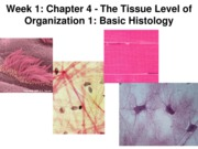 Z331 Fall 2010 Ecampus Week 1 Histology 1 Basic Posted