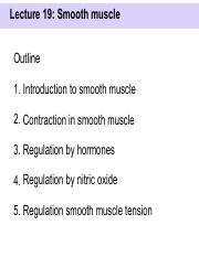 L19 - Smooth muscle