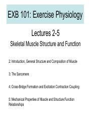 02-05+Skel+Muscle+EXB101+SP16.pdf