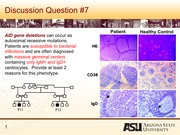 Lecture 10 - Immune cell migration