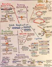 DNA replication notes.pdf