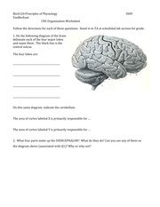 Worksheet CNS Org