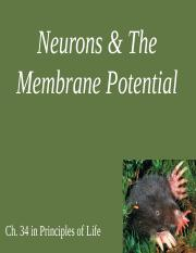 1 Neurons and Membrane Potential