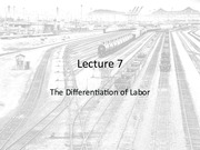 Lecture 7 - The Differentiation of Labor