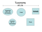 Lecture on Taxonomy