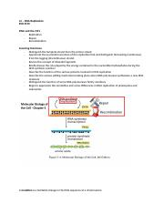 L4 – DNA Replication.docx