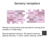 Week 10 Ch. 16 General Sensory Powerpoint Lecture