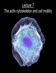 Lecture 7--actin and cell motility.pdf