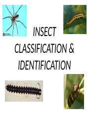 INSECT CLASSIFICATION & IDENTIFICATION lab.pptx