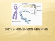 Topic 3- Chromosome Structure