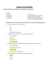 Anatomy of the Constitution Answer Sheet.docx - Anatomy of ...