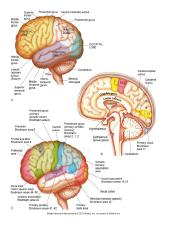Function of brain and hemispheres