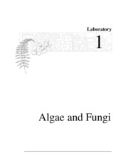 Lab1_algae and fungi