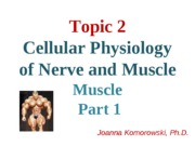 ANP 1105 Skeletal muscle  JK part 12