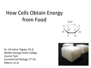 how cells obtain energy