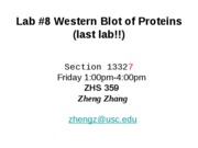 Lab _8 Western friday