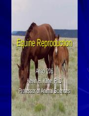 Equine reproduction 2060.ppt