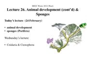 BIS2C Lect26_Ward_Development _ Sponges_ppt