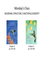 Lecture+16+-+Neuronal+Structure%2C+Function+and+Diversity+I (1).pdf