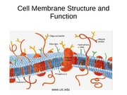 Cell Membrane Structure and Function, 2007.ppt