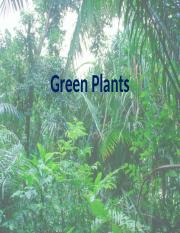 9+-+green+plants (1).ppt