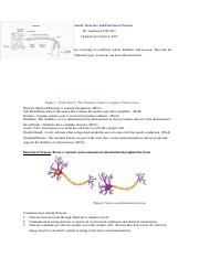 cell body study guide.docx