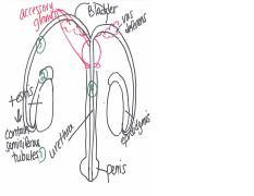 Reproductive Sys Drawings, S15