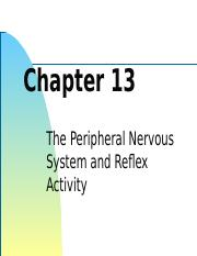 Chapter 13 - Peripheral Nervous System.pptx