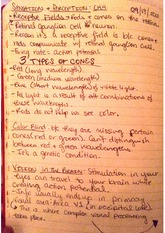 sensation and perception notes