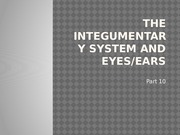 Lecture- The Integumentary System and Eyes