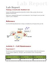 lab_report_genetically_modified.doc
