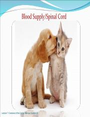 Lecture 7R_Blood Supply_Spinal Cord_4