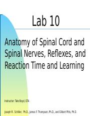 Lab 10 - Spinal Cord Reflexes.ppt