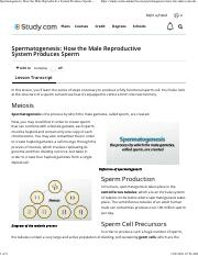 Spermatogenesis_ How the Male Reproductive System Produces Sperm - Video & Lesson Transcript _ Study